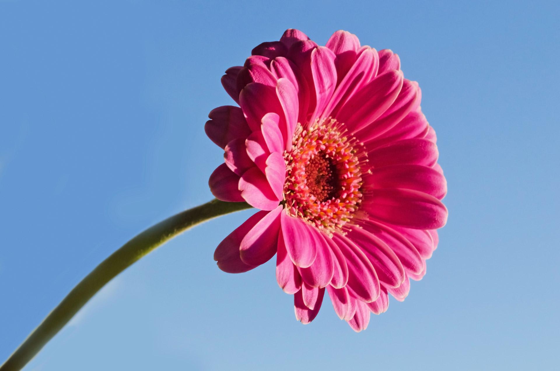 pekna-kvetina